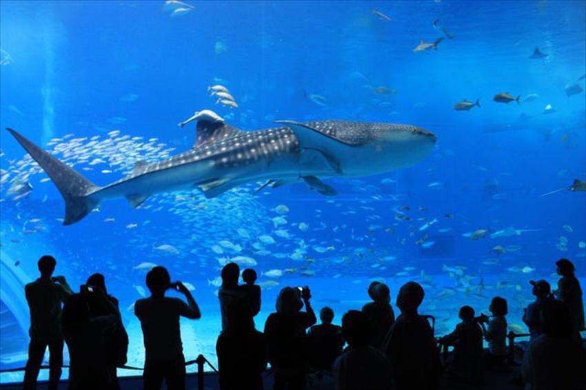 20150724-17-03-Okinawa-visit-Aquarium